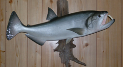 fiberglass fish reproduction of South American payara