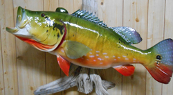fiberglass replica peacock bass
