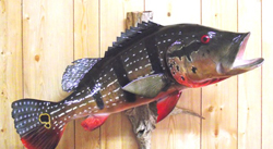 fiberglass reproduction peacock bass