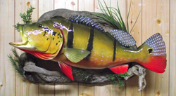 replica peacock bass